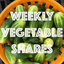 Weekly Vegetable Shares