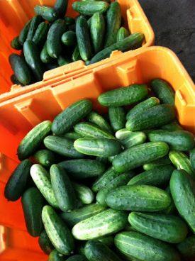 cucumbers.7